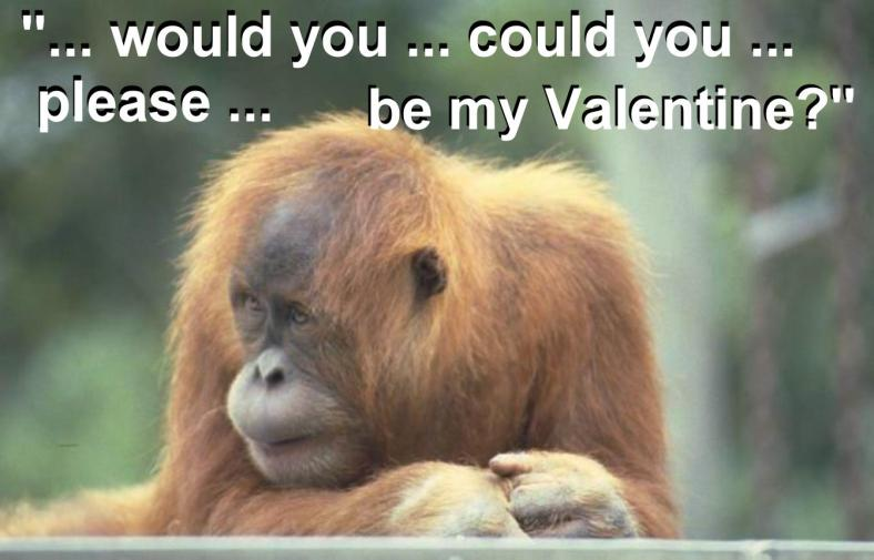MONKEY VAL PIC 2 - with text