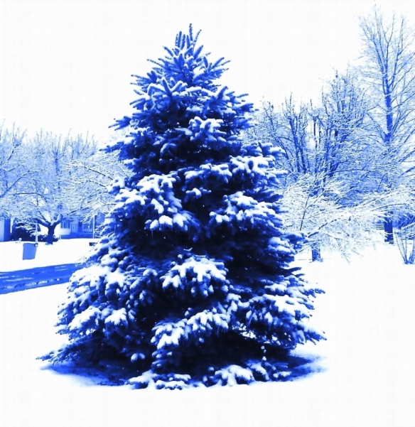 BLUE TREE - EDITED FOR BLOG