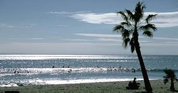 SUNNY OCEAN AND PALM
