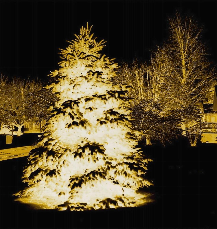 CHRISTMAS TREE NEGATIVE - BRIGHTENED