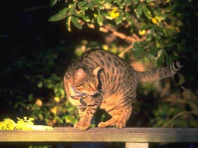 CAT # 1