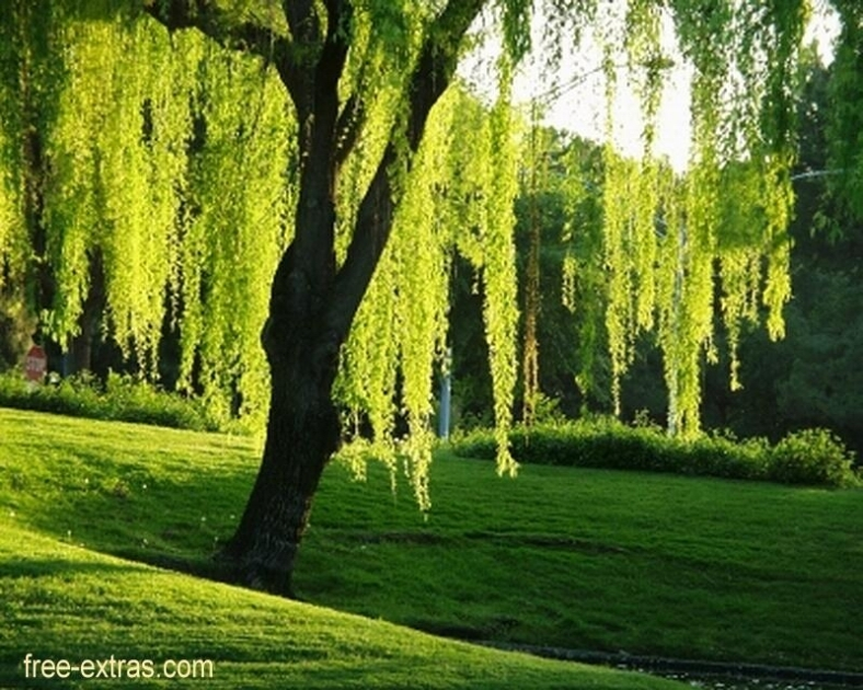 WILLOW TREE - credits