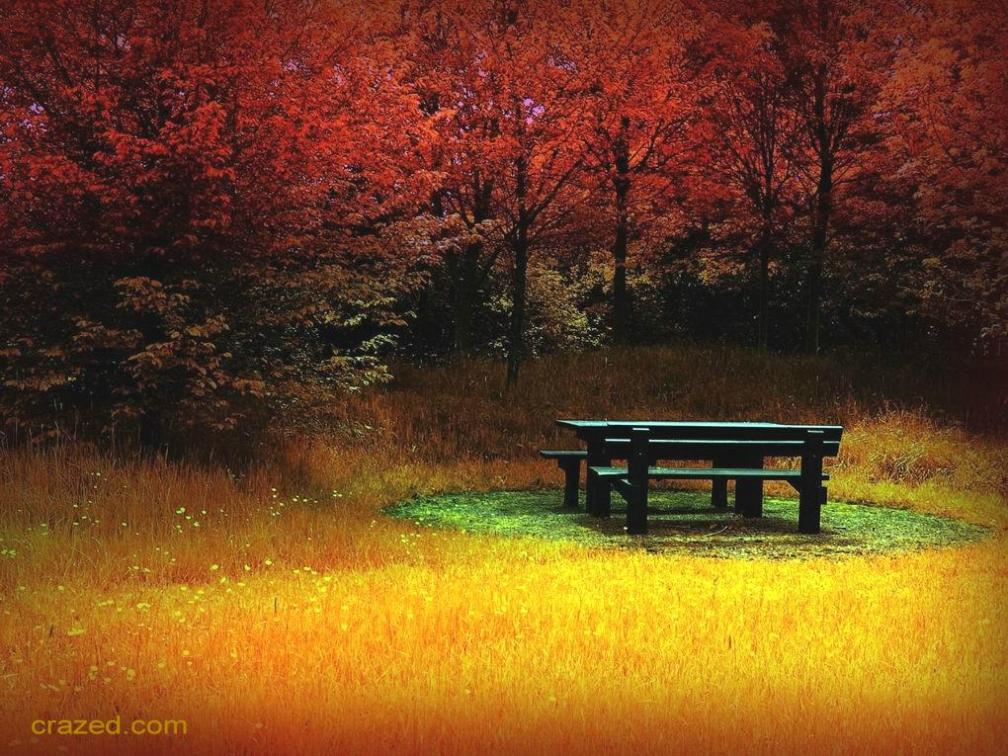 BRILLIANT AUTUMN FOREST, TABLE - SMALLER, crazed credits