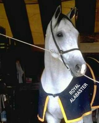 WHITE HORSE - ROYAL ALABASTER