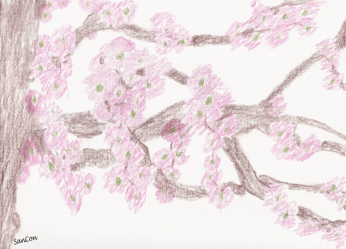CHERRY BLOSSOMS - EDITED - w. credits