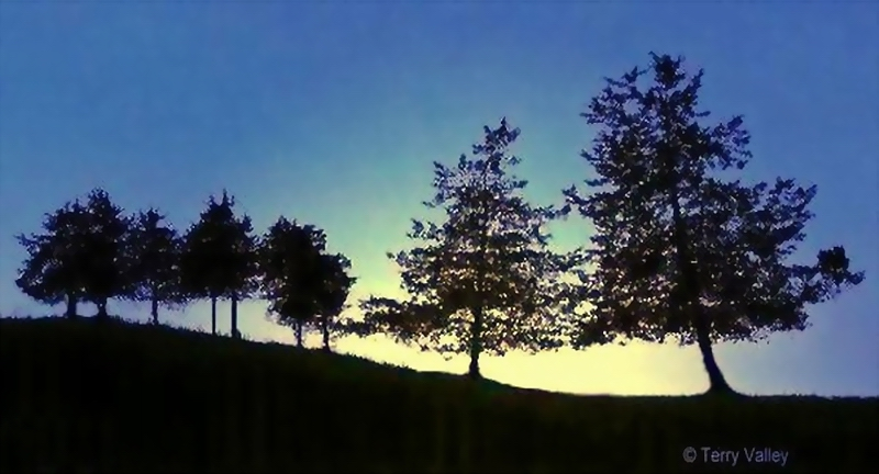 TERRY'S BLUE TREES WITH SUNRISE - larger
