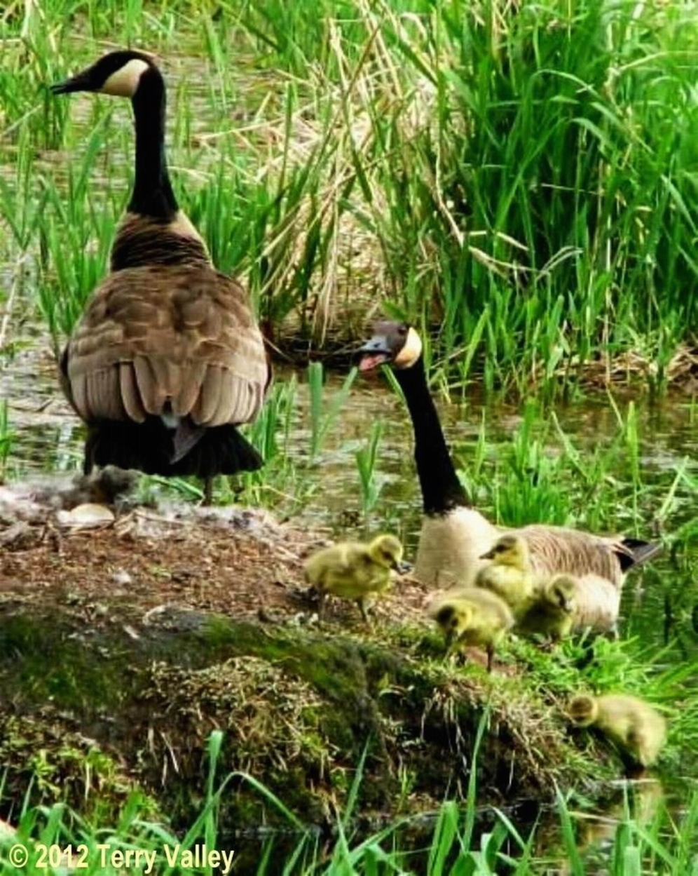 GOSLINGS - credits - CONTRAST EDITED