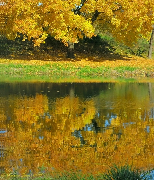 GOLDEN TREE REFLECTION