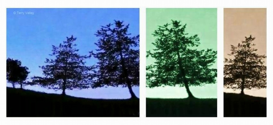 TERRY'S TREE SILHOUETTES MULTI - CREDITS