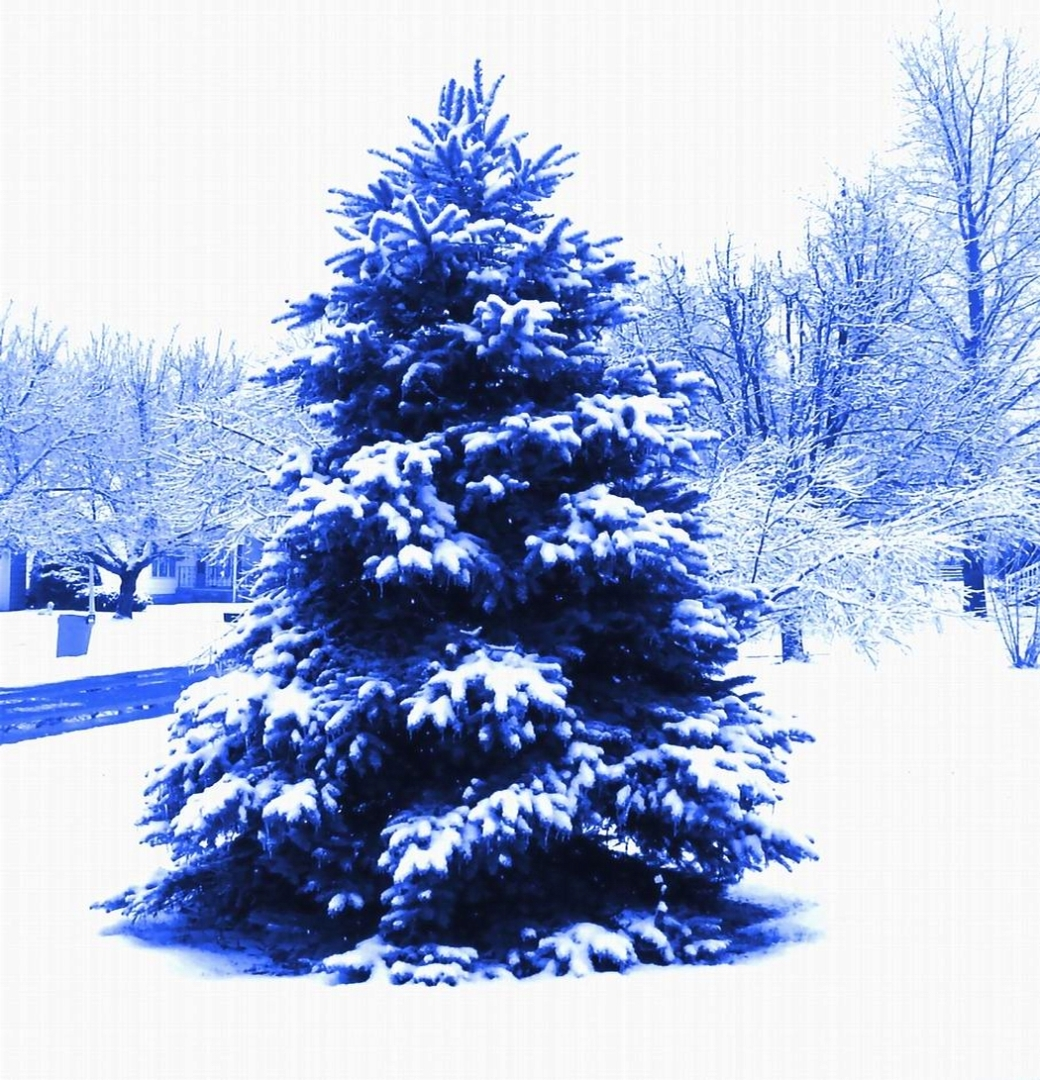 BLUE TREE - SMALLER FOR BLOG