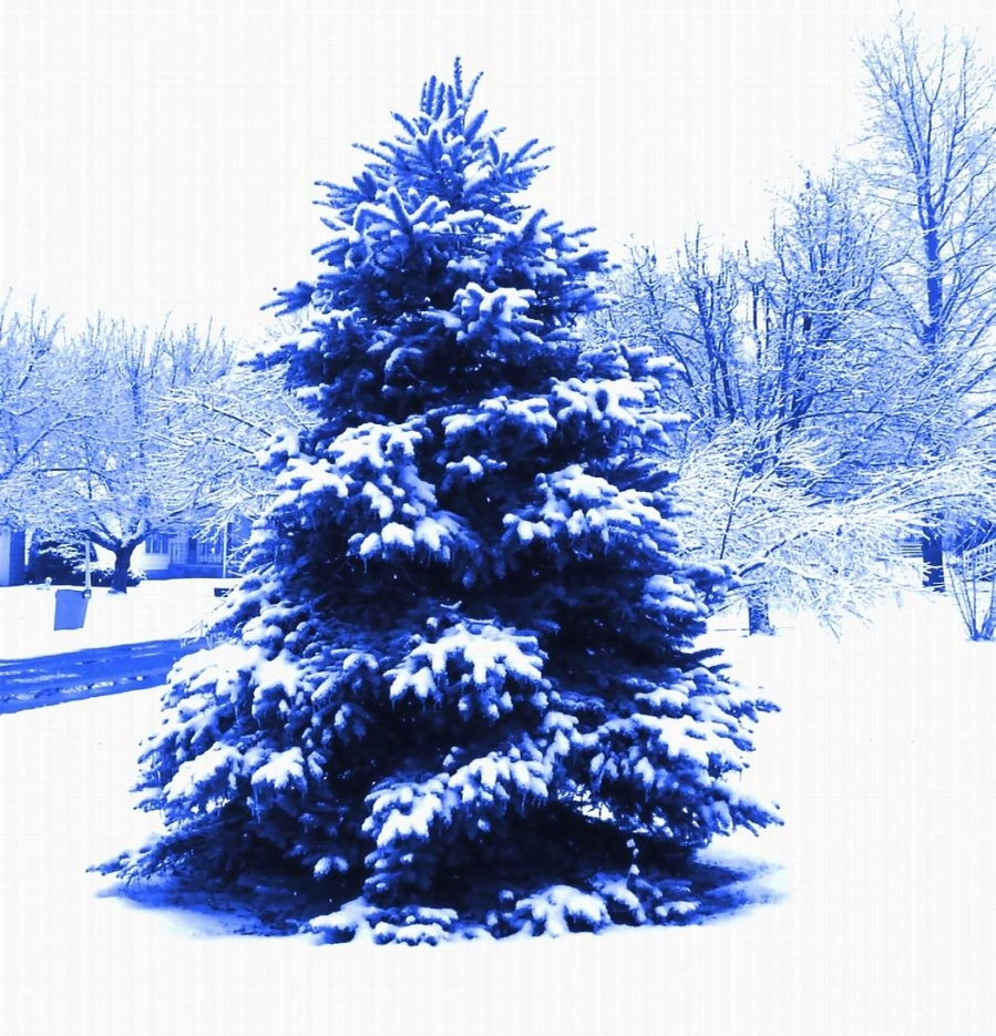 BLUE TREE - SMALLER FOR BLOG