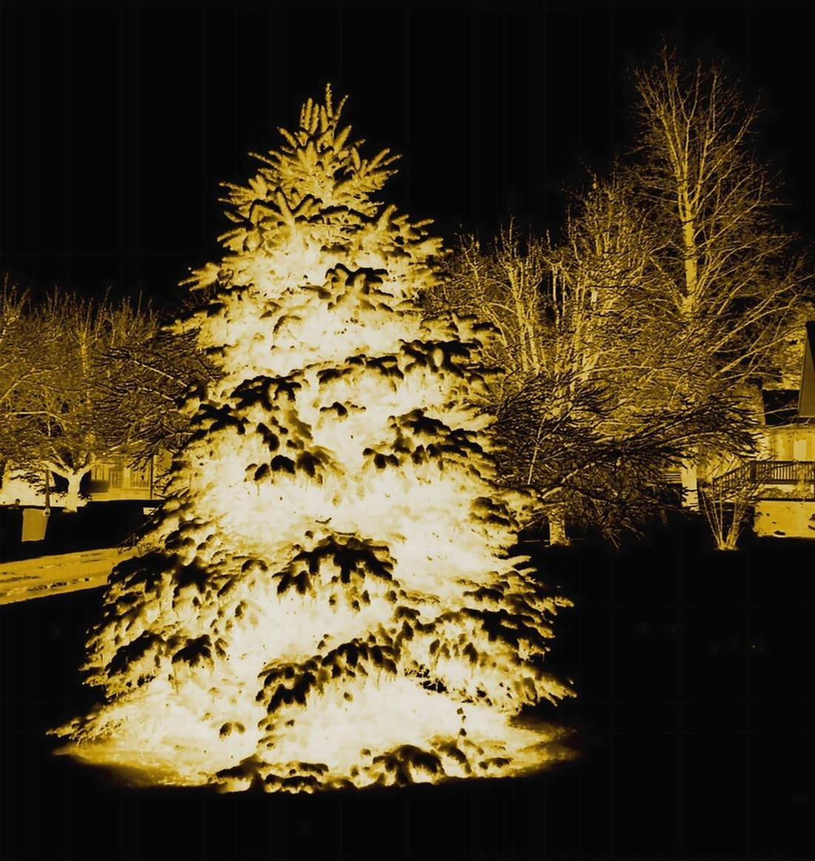 NEGATIVE CHRISTMAS TREE - SMALLER