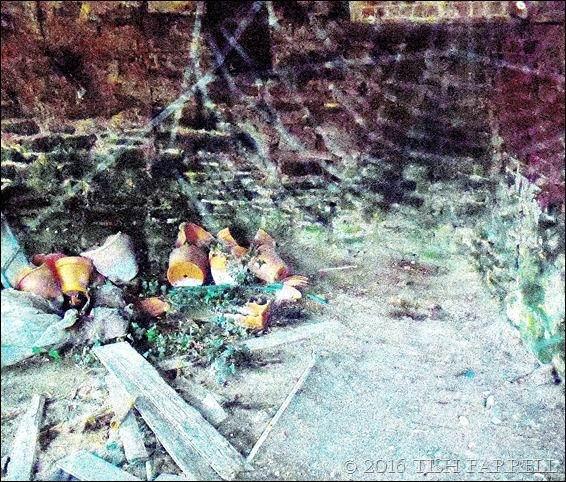 TISH FERRELL'S SPIDER WEB