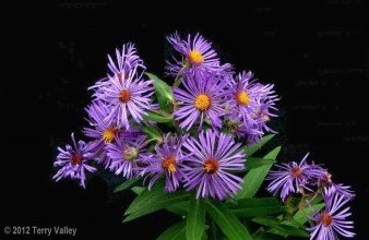 ASTERS - with credits