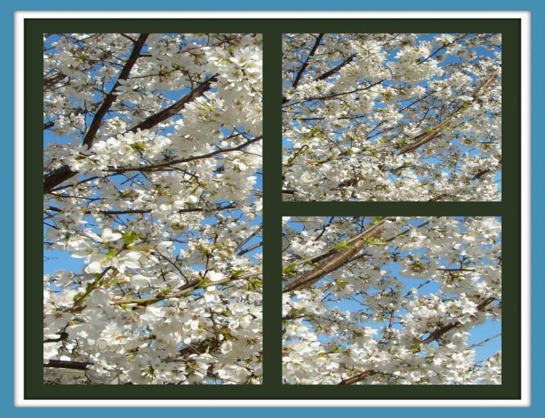 NEIGHBOR'S WHITE TREE COLLAGE 2