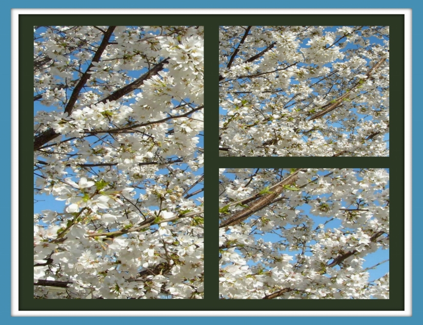 NEIGHBOR'S WHITE TREE COLLAGE 2