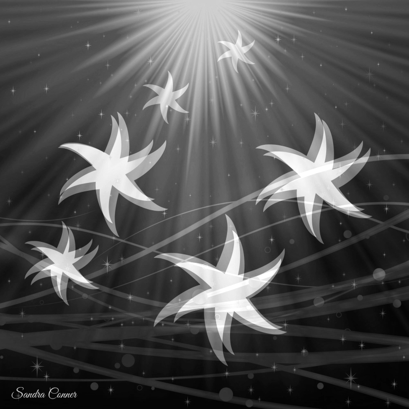 JUBILANT STARS B & W
