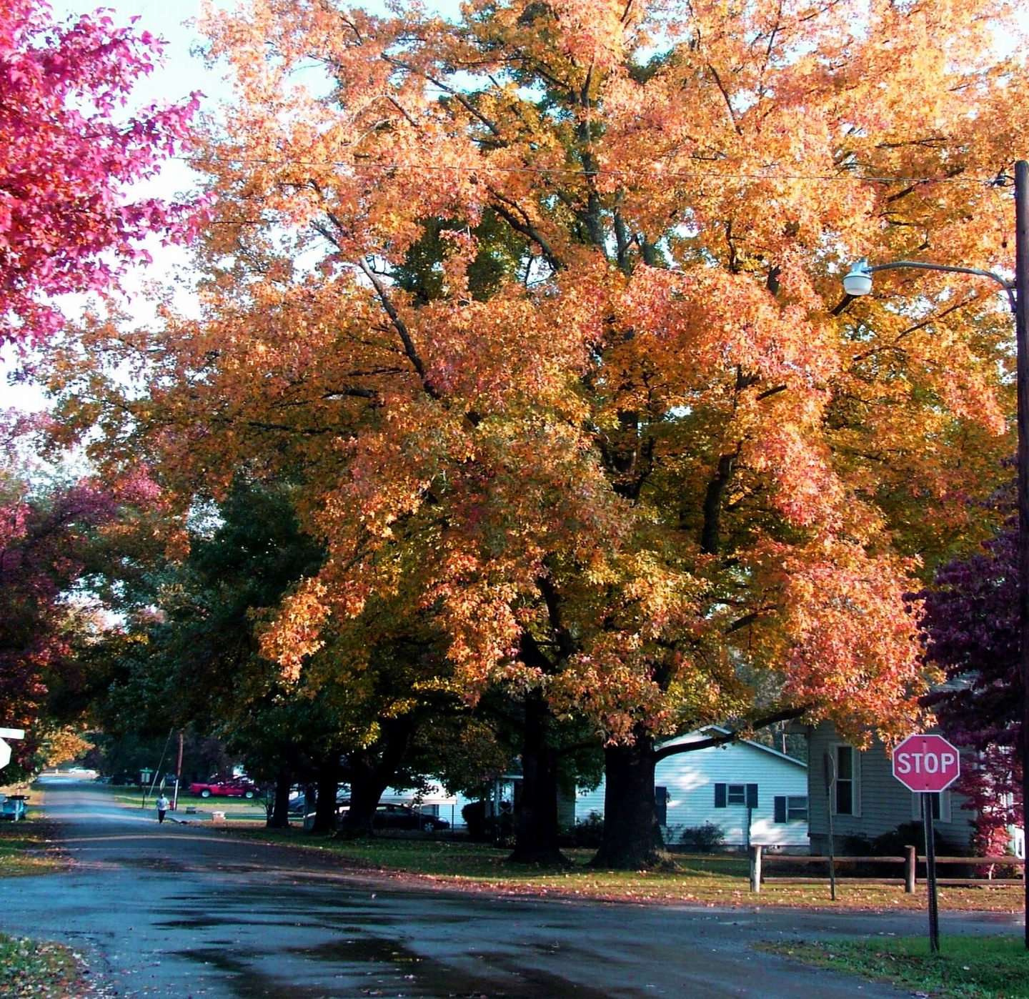 cropped-connies-tree-bright-color1.jpg