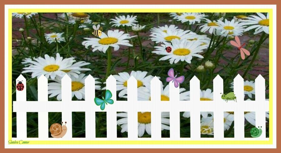 white-fence-daisies-framed