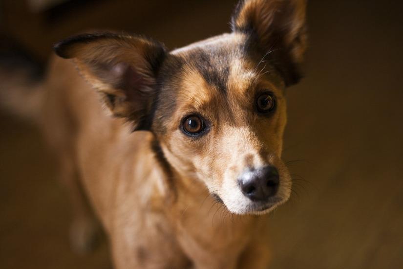 small-brown-dog-pub-dom-raincarnation40
