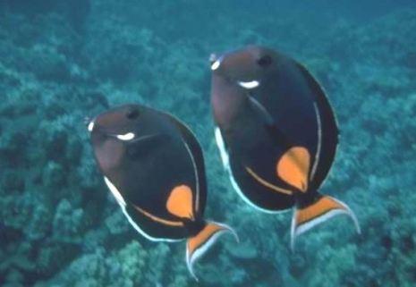 two-black-fish-lightened