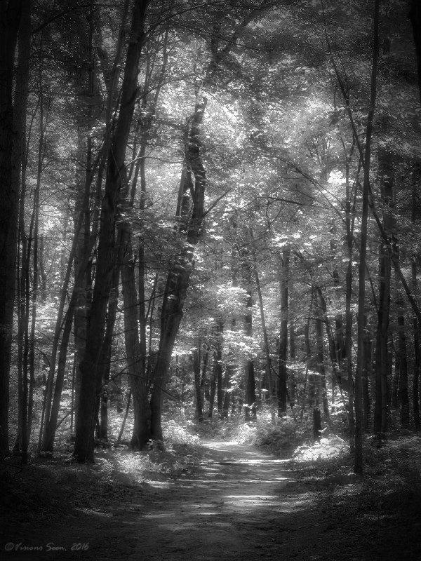forest-b-w-hazy