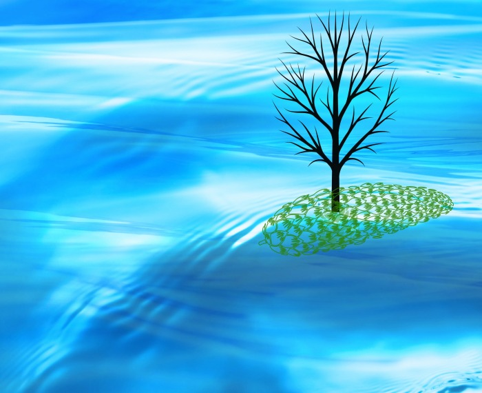 tree-on-island