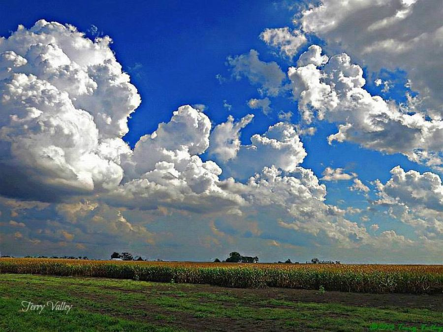 CLOUDS & CORNFIELD - TERRY w. credits