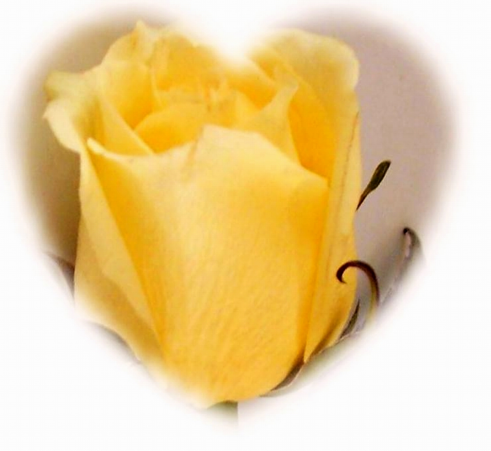 YELLOW ROSE CAMEO HEART - larger