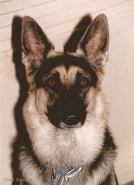 KENT'S DOG - EXTRA - credits