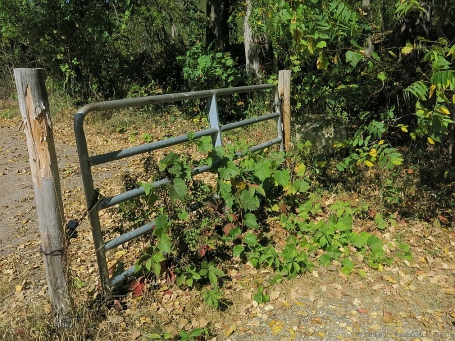 GATE WITH WEEDS