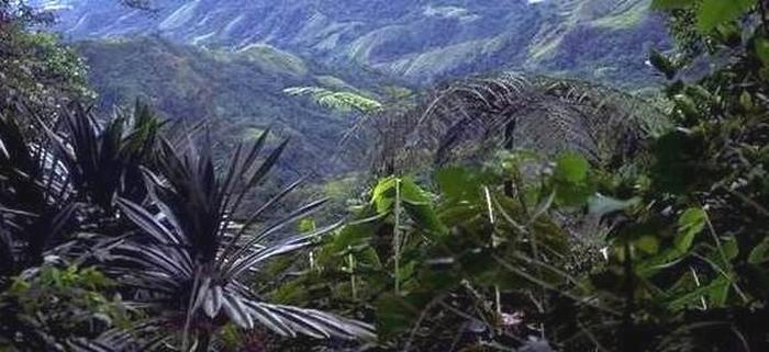 JUNGLE ISLAND 2