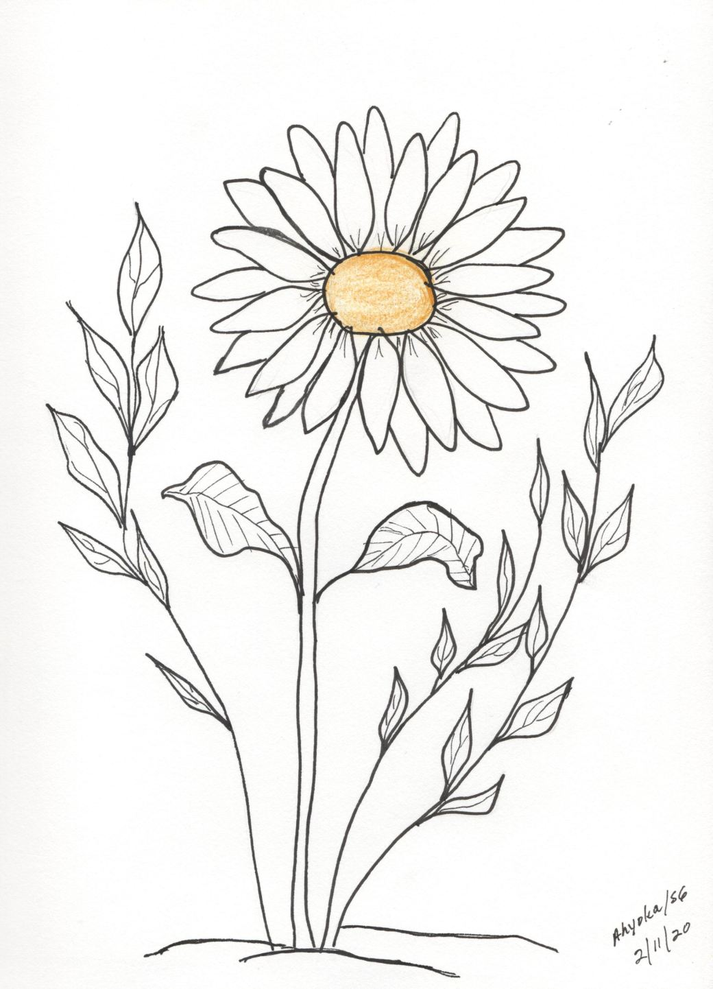 SOLITARY DAISY - YELLOW TOUCH