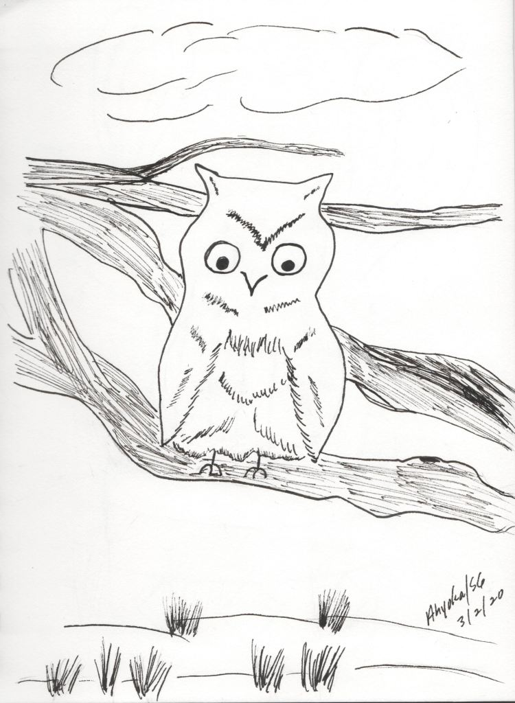 OWL ON LIMB - INK SKETCH
