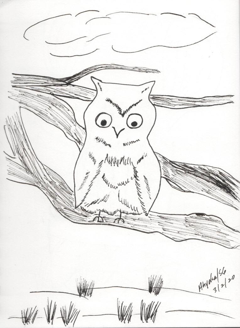 OWL ON LIMB - INK SKETCH