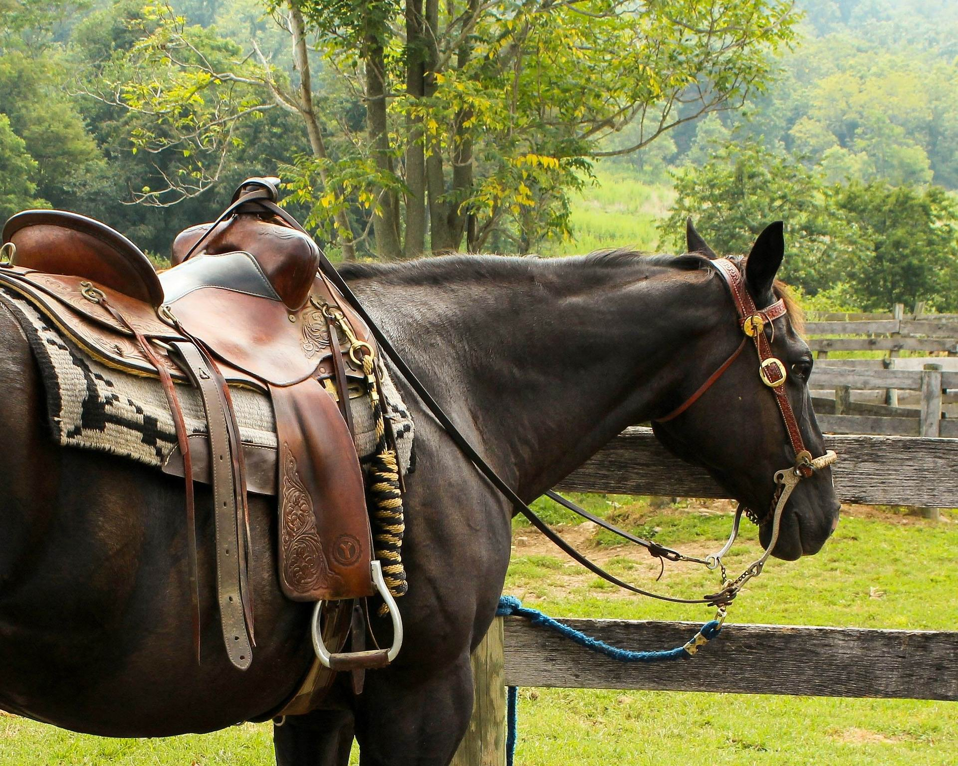 HORSE & SADDLE -- James DeMers -- PX